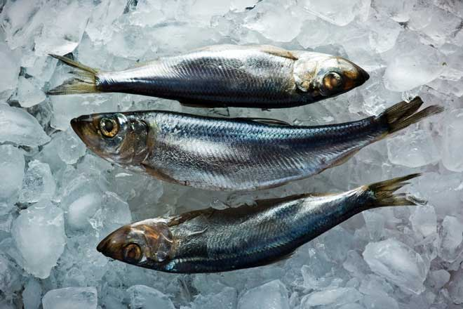 Marine edilmiş ringa balığı: Pişirmenin 5 yolu